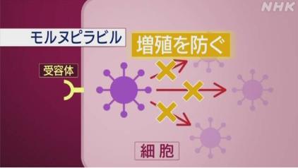 けむっし~ブログ モルヌピラビル